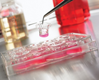 IBMCB - Biomimetics & Nanobiotechnology